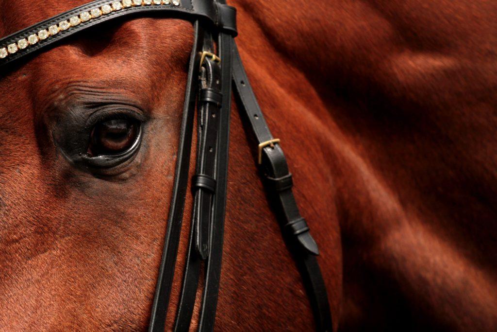 Alt om Heste