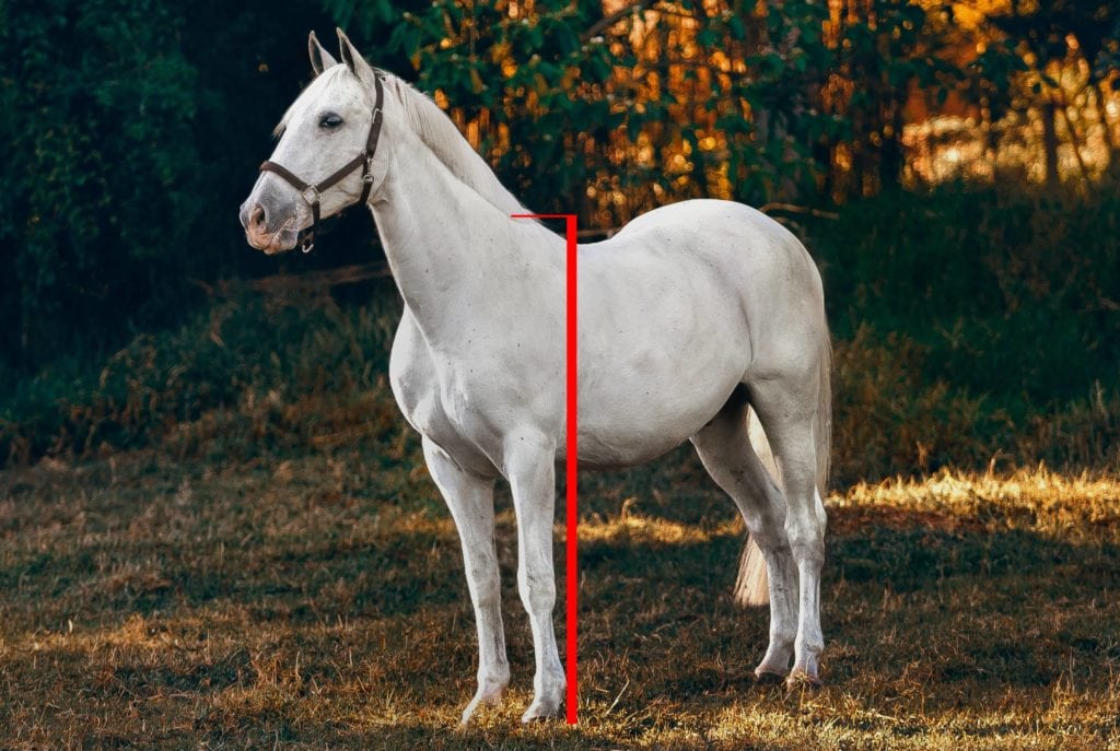 Stangmål - mål hest